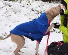 Antes de salir a caminar hace esto al perro. ¡Es genial, pero yo no lo habría pensado por mi cuenta!
