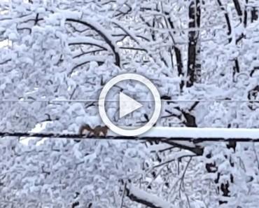 Mira por la ventana y ve esto en la nieve. Ahora MIRA cuando comienza a moverse...