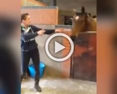 Este caballo estaba pensando en sus cosas cuando ella comenzó a bailar... ¿Su reacción? ¡Tienes que verla!