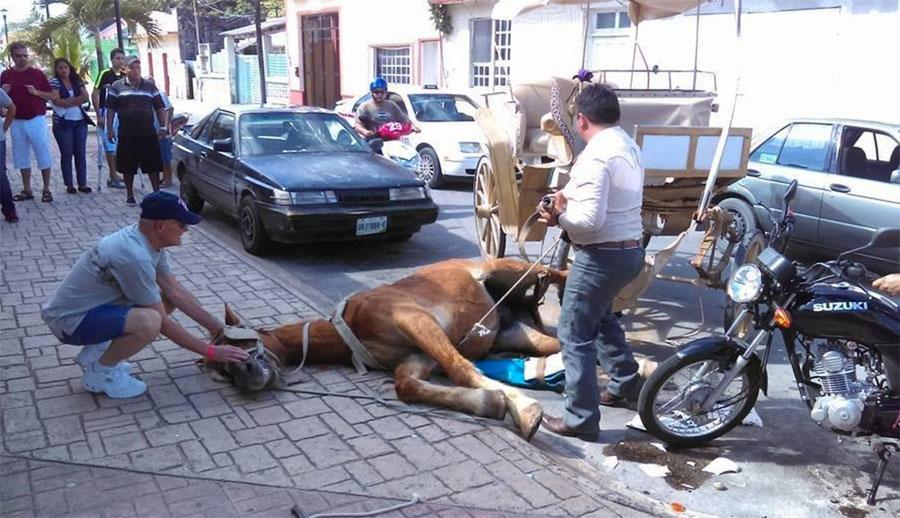 Otro caballo sufre un colapso en las calles de una popular ciudad turística