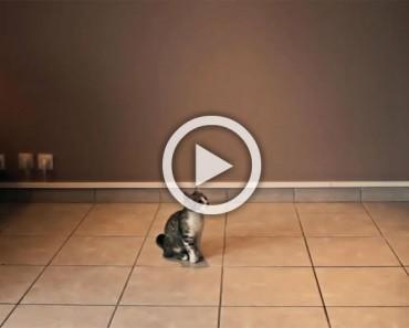 Mira lo que este gatito hace cuando sus dueños se van a trabajar... ¡Es un héroe!