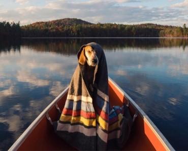Este perro hace un mágico viaje de 100.000 kilómetros por carretera con su mejor amiga