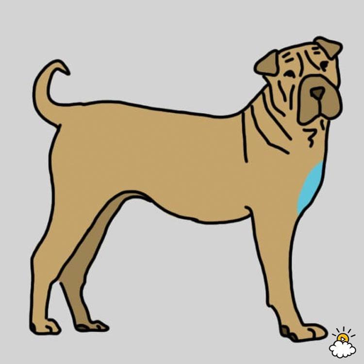 El masaje de estas 9 zonas de tu perro puede ser crucial para su salud