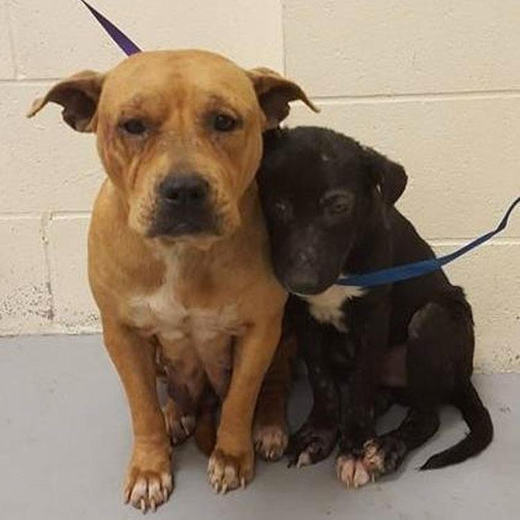 Estos perros pensaban que estaban solos en el mundo. Pero estaban equivocados