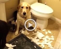 Son todos culpables, pero mira lo que hace este perro...