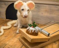 Cada Navidad este fotógrafo transforma a su perro en diferentes animales y este es el resultado