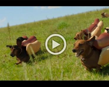 Sí, estos perros salchicha llevan salchichas unidas a ellos. ¡Y es absolutamente hilarante!