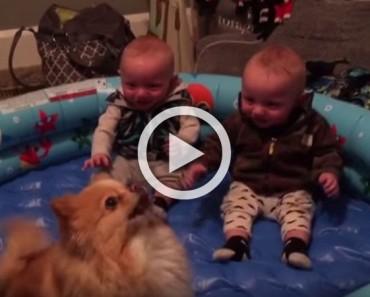 Este vídeo tiene solo 39 segundos de duración, ¡pero cada segundo es divertidísimo!