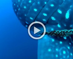 Este buceador descubre un pez gigante. Cuando la cámara lo enfoca me quedé boquiabierto