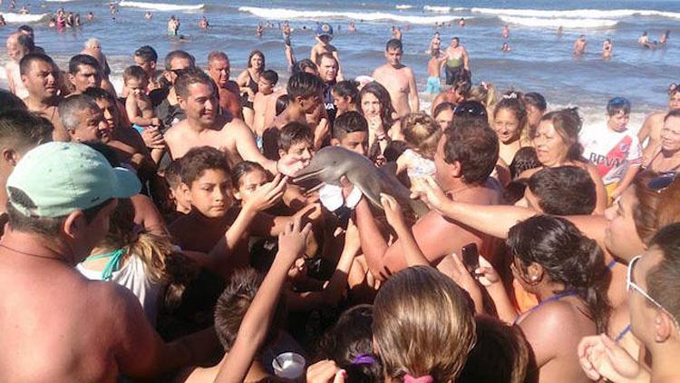 Muere una cría de una especie rara de delfín mientras los bañistas se hacían selfies con ella 1