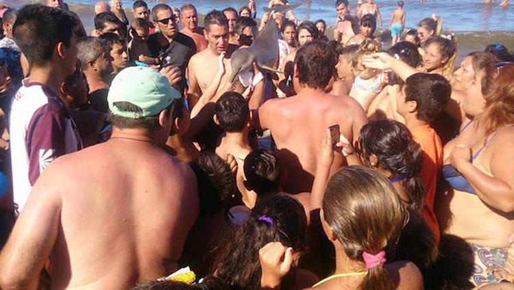 Muere una cría de una especie rara de delfín mientras los bañistas se hacían selfies con ella 2