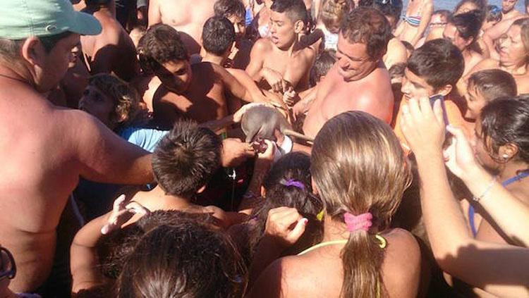 Muere una cría de una especie rara de delfín mientras los bañistas se hacían selfies con ella 3