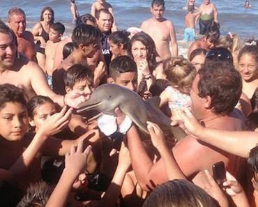 Muere una cría de delfín mientras los bañistas se hacían selfies con él