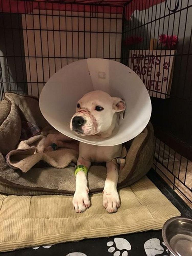 Atrapan al propietario del perrito al que le había cerrado la boca con cinta