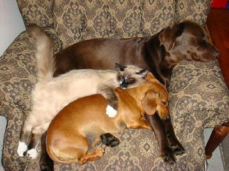 18 adorables gatos que han encontrado la mejor almohada de la casa