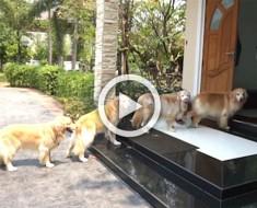 Oye un ruido extraño en la puerta... ¿Pero qué pasa en el exterior? ¡Atentos a los 4 perros!