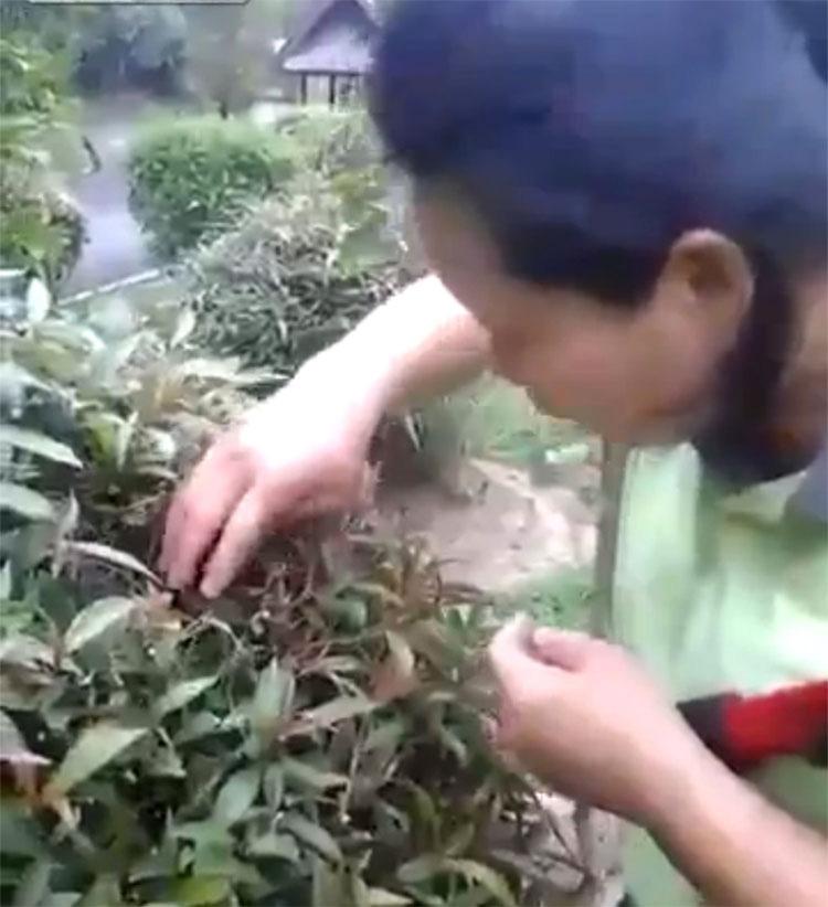IMPACTANTE: Esta jardinera se encuentra con un nido de crías de pájaro... ¡y luego se los come!