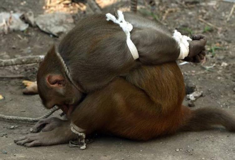 Castigan a este mono de forma extraña, y la multitud se reúne con intenciones horribles