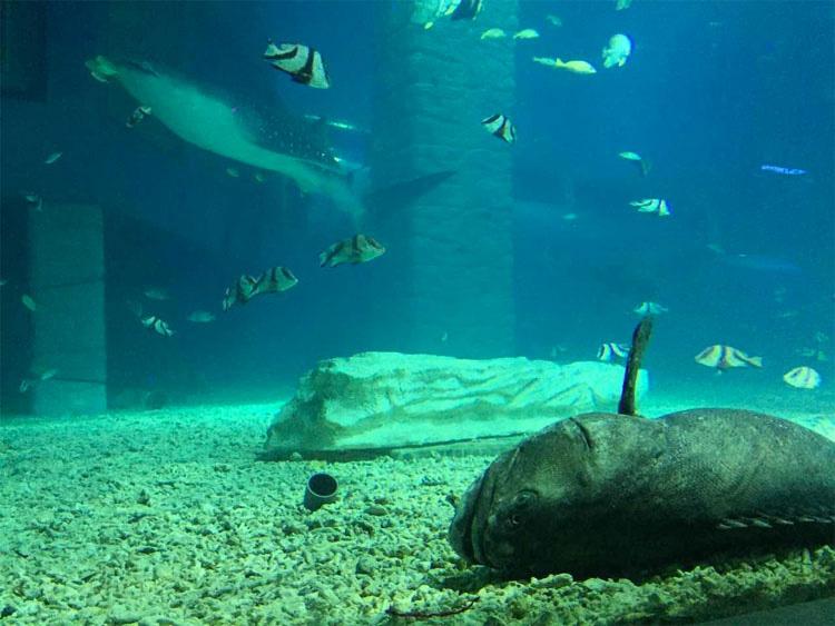 ¿Es este el peor zoo del mundo?