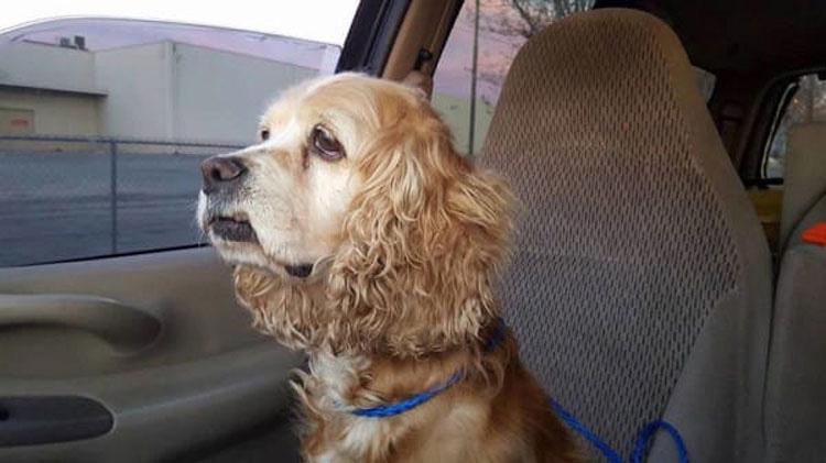 Su familia la deja por un perro más joven. Después un refugio avisa con ESTO