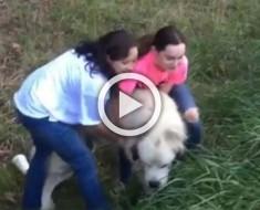 Este perro fue abandonado en plena carretera. Mira lo que hizo toda una familia al verlo, ¡INCREÍBLE!
