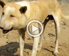 No creían lo que veían cuando este perro callejero se les acercó. Pobre animal