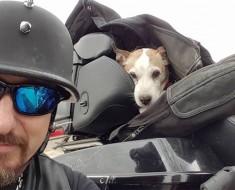 Una mala persona deja a un perro en una carretera. Ahora mira lo que hace este motorista
