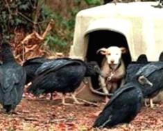 Este asustado perrito se encuentra rodeado de muerte. Mira lo que sucede cuando llegan a rescatarlo...