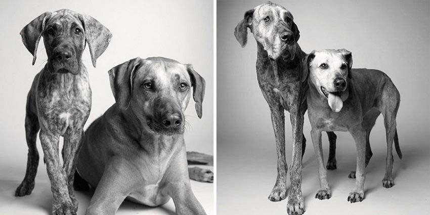 Estas impactantes fotos de perros mayores muestran su transformación desde cachorritos hasta ser ancianos