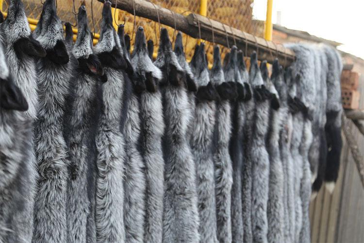 Desollados vivos: terribles imágenes muestran cómo sufren los animales por la moda