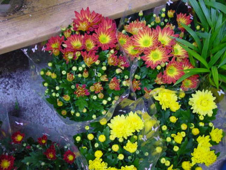 Colocó estas plantas en su casa y la calidad del aire aumentó dramáticamente