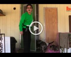Esta señora tiene más de 1.000 gatos en su casa. Parece una locura, hasta que ves dónde viven