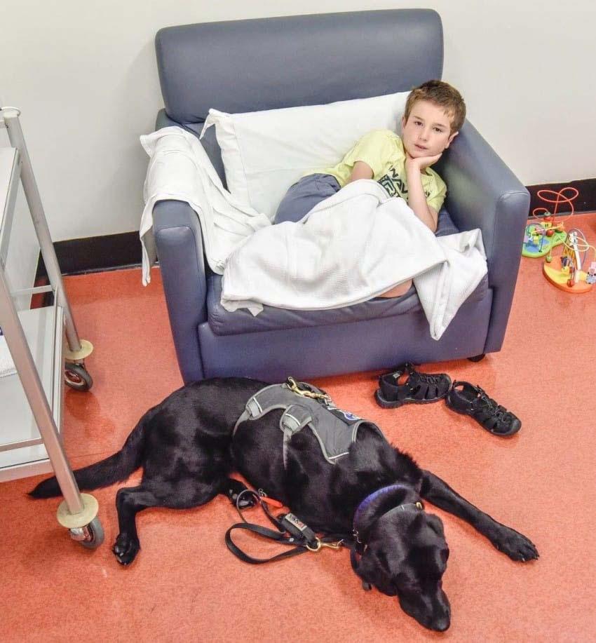 Este perro se niega a abandonar la cama de hospital de su muchacho. ¿La razón? ¡Esto es INCREÍBLE!
