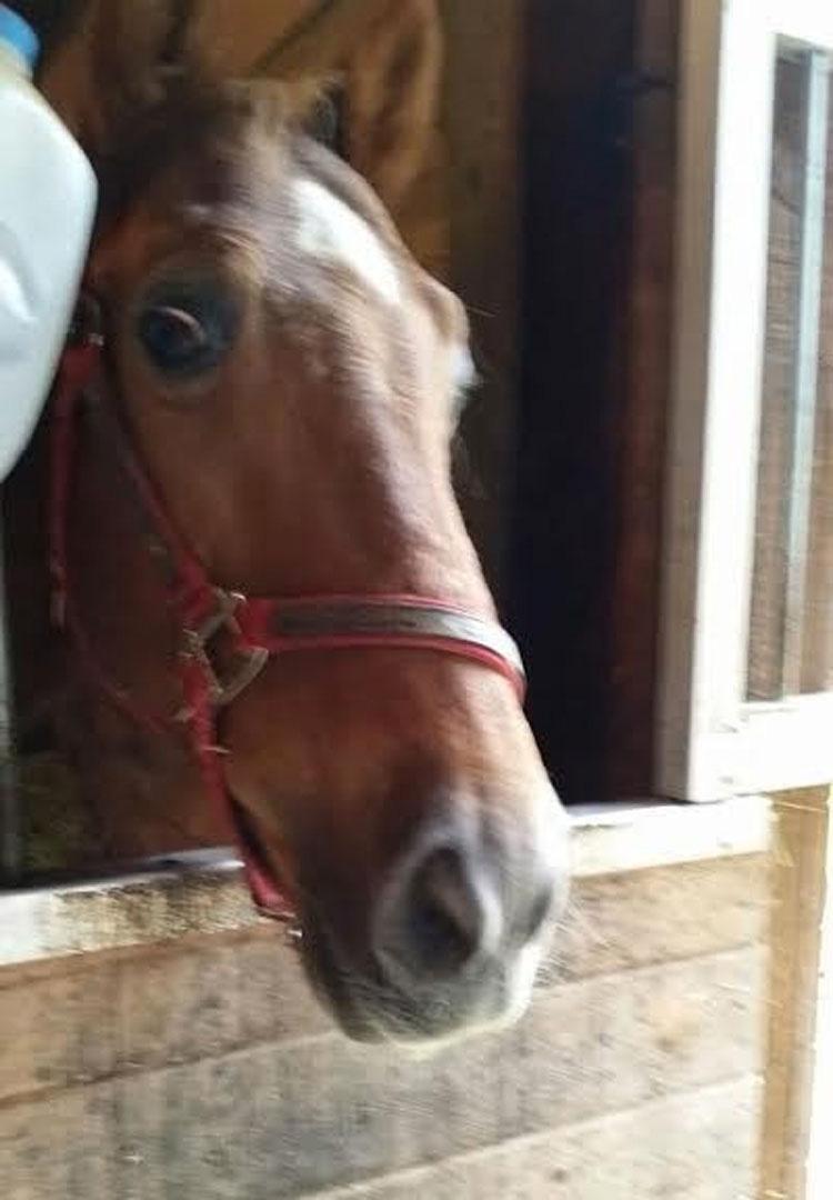 Este caballo no ha salido al exterior en AÑOS por culpa de su dueño
