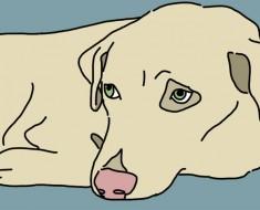 Los expertos dicen que 1 de cada 4 perros sufre de depresión. ¡No tenía idea de la sorprendentemente razón común!
