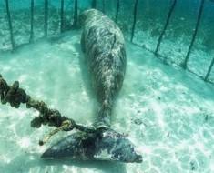 Estos buzos se sorprendieron al descubrir animales atrapados en jaulas submarinas