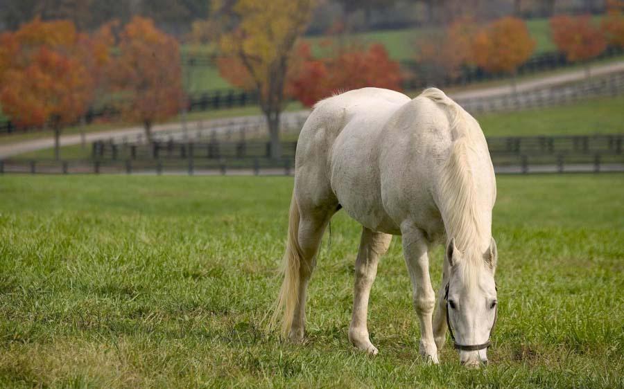 16 fotografías que muestran la belleza de los caballos