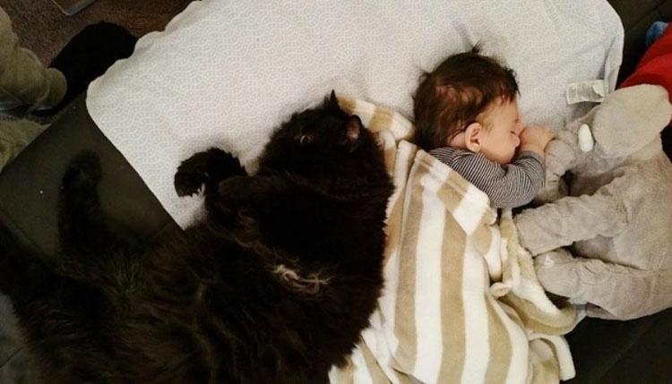 Este gato se enamoró de un bebé antes de nacer y ahora lo protege todo el tiempo