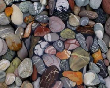 Hay algo que está al acecho entre estas rocas. ¿Puedes ver de qué se trata?