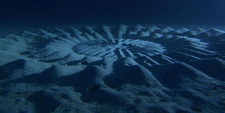 Estos misteriosos círculos bajo el agua desconcertaban a los científicos durante décadas. ¡Mira lo que son!