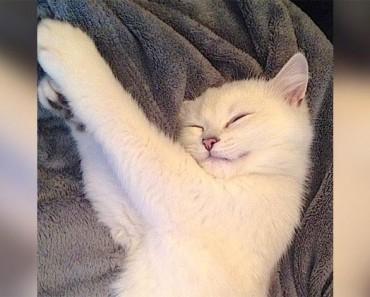 Parece un gato normal. ¿Pero cuando abre los ojos? ¡IRREAL!