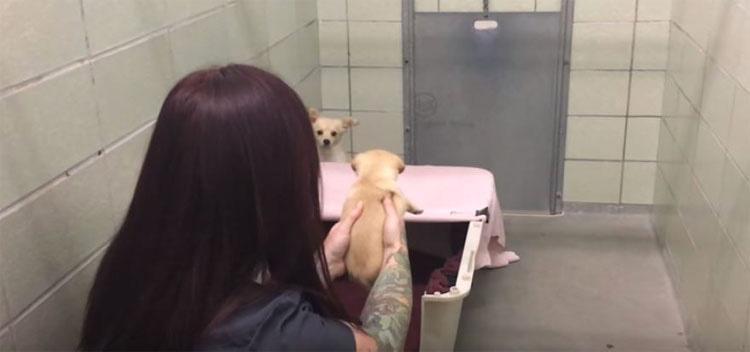Esta asustada mamá se esconde en la esquina, pero mira cuando ve la cara de su perrito