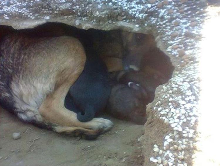 Pensaban que este perro estaba de luto por su propietario. Cuando ven por qué se esconde