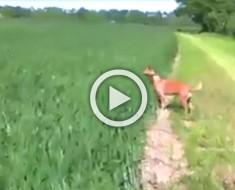 Este perro ve algo extraño en el campo de hierba. Ahora atención a sus 4 pequeñas patas