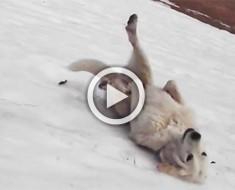 Este perro acaba de descubrir una colina cubierta de nieve. Lo que hace te hará sonreír el resto del día