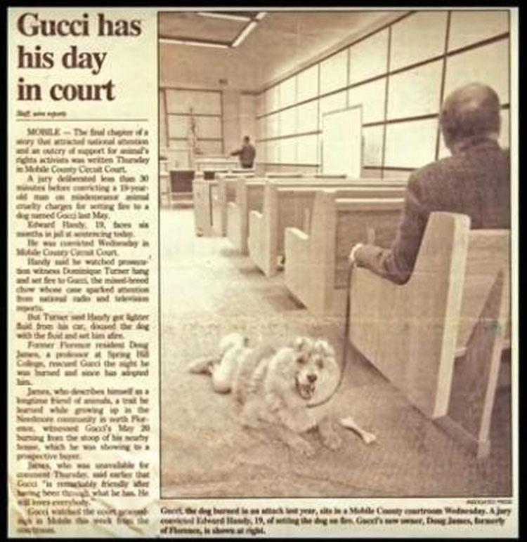 Este perro sobrevivió a un terrible abuso... y después CAMBIÓ el mundo