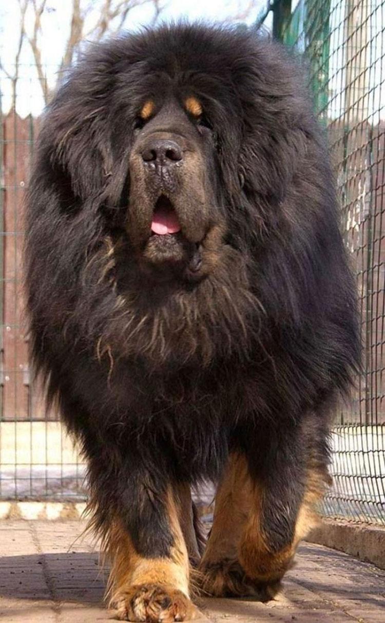 15 magníficos perros que no tienen idea de lo ENORMES que son. Atención al #6