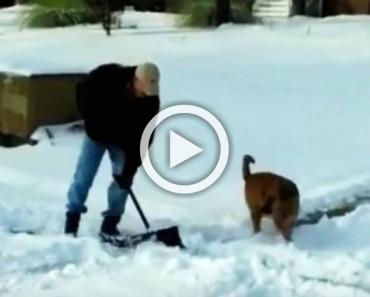 Este perro ve que su dueño necesita ayuda con la nieve y hace ESTO. ¡Hilarante!