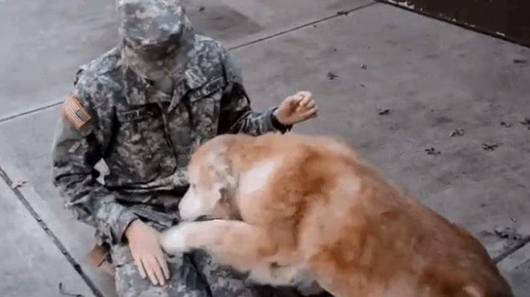 Este perro mayor reacciona así cuando su mejor amigo regresa a casa del ejército