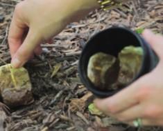 Plantó estas bolsitas de té en su jardín, y lo que pasó es más que increíble